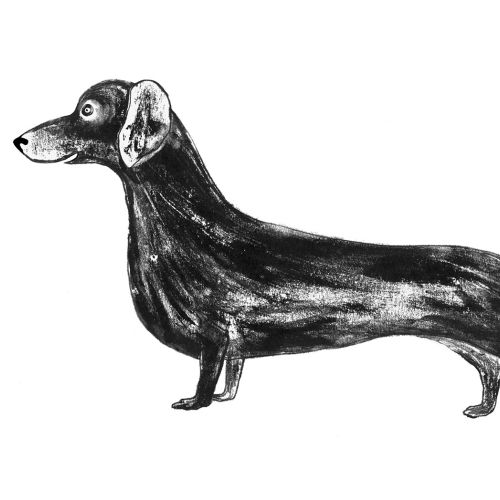 An illustration of Sausage dog