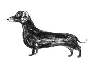 An illustration of Sausage dog