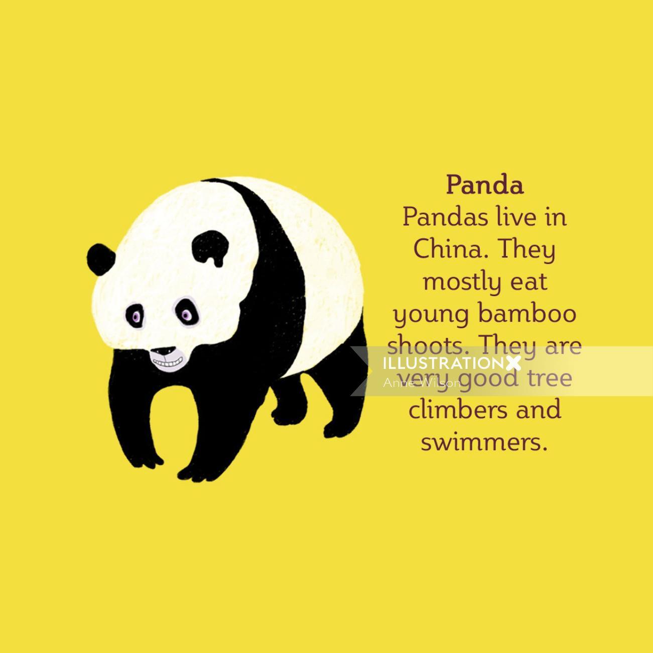 Panda | Animal illustration collection
