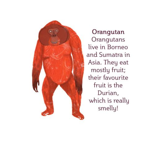 Orangutan | Animal illustration collection