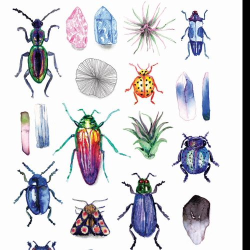 Beetles & Gemstones Ink Illustration