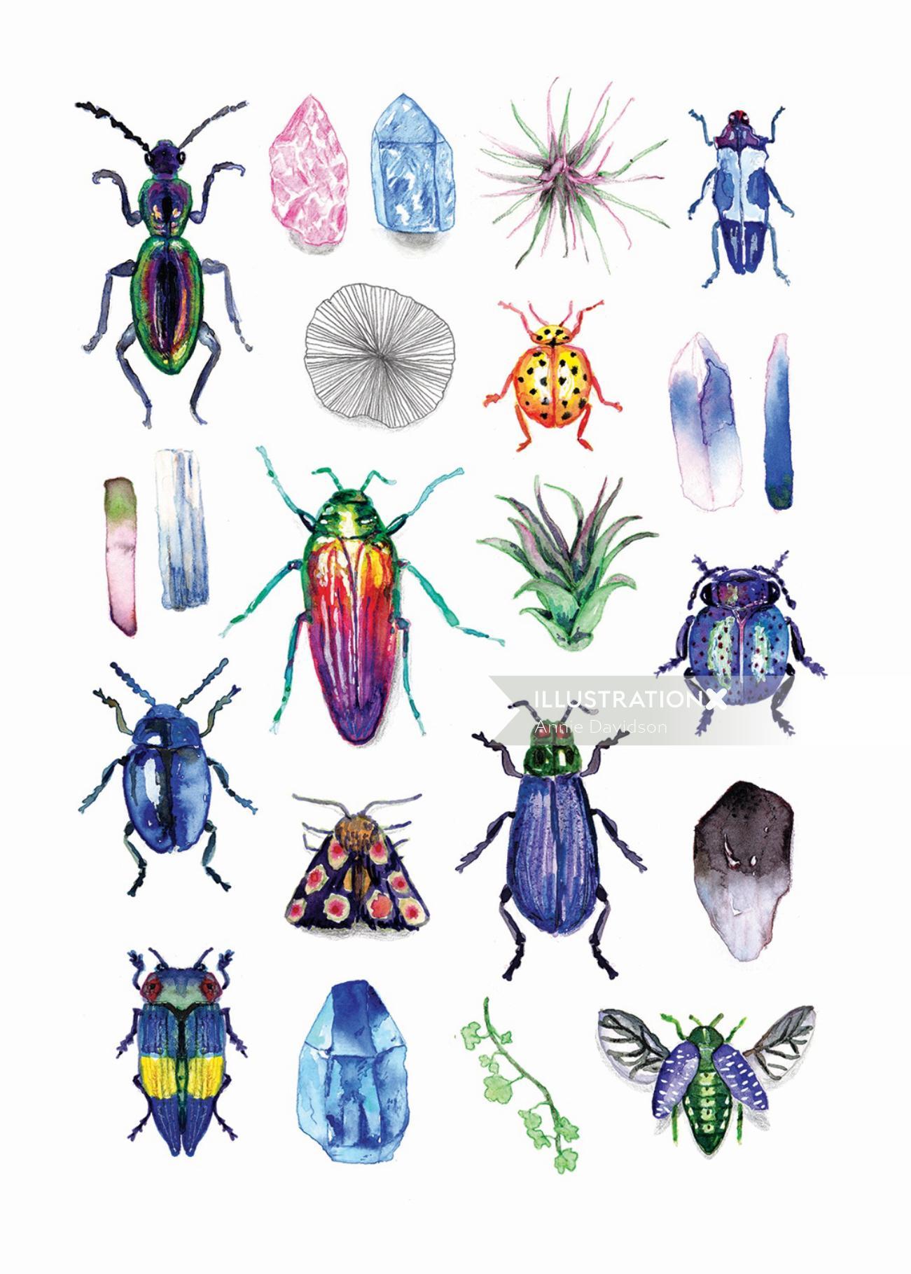Beetles & Gemstones Ink Illustration