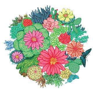 Illustration of Cactus plant