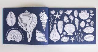 Divine conch design for book page