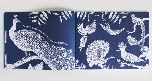 Birds illustration for Children's book page