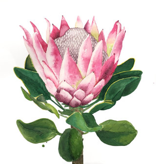 Protea flower watercolour painting