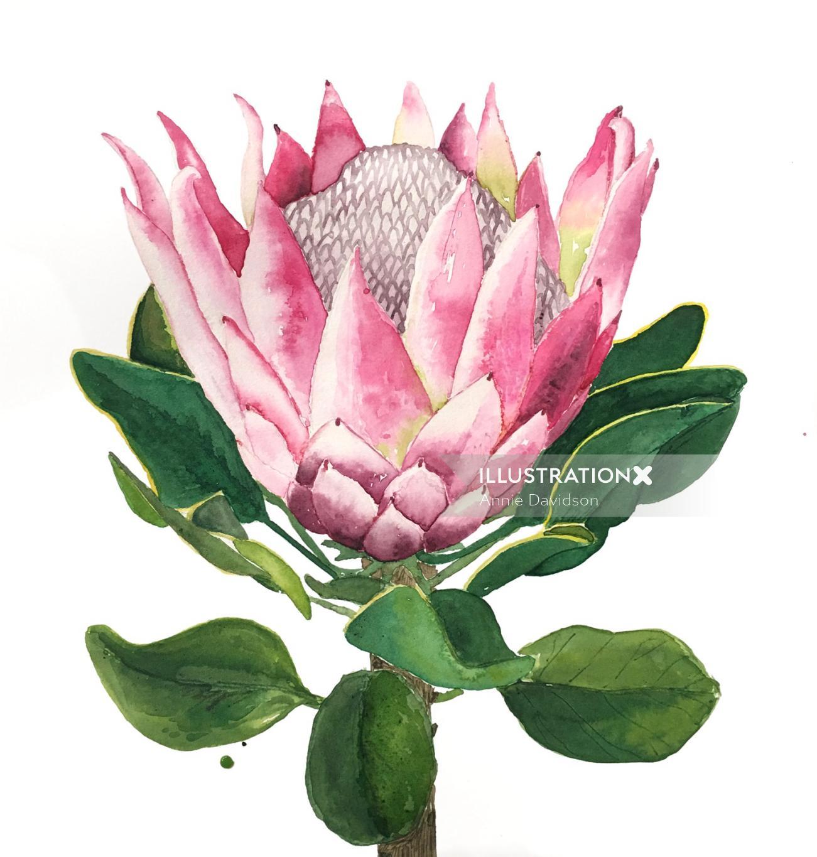 Protea flower watercolour painting