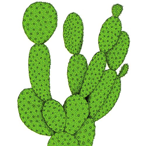 Graphical art of cactus plant