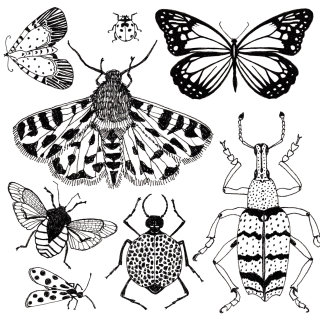 Black and white art of Bugs
