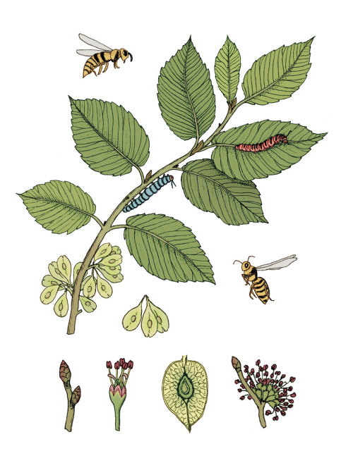 Graphic of insects on plant