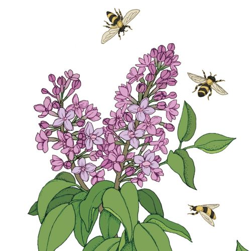 Graphic of honey bees and flowers