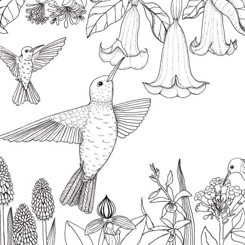 Black & White line drawing of birds and flowers