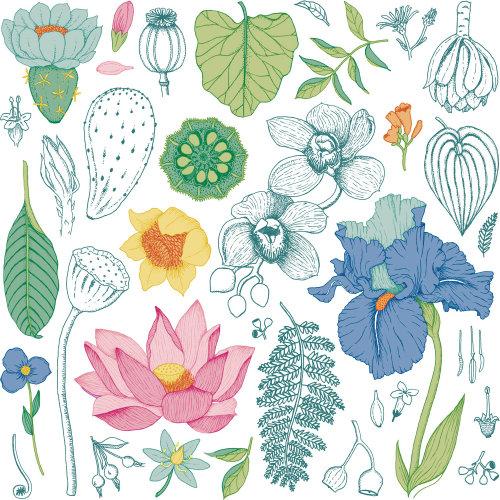 Decorative floral repeat