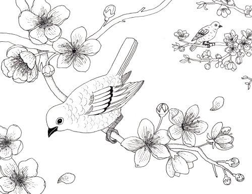 Black & white line illustration blossom colouring book