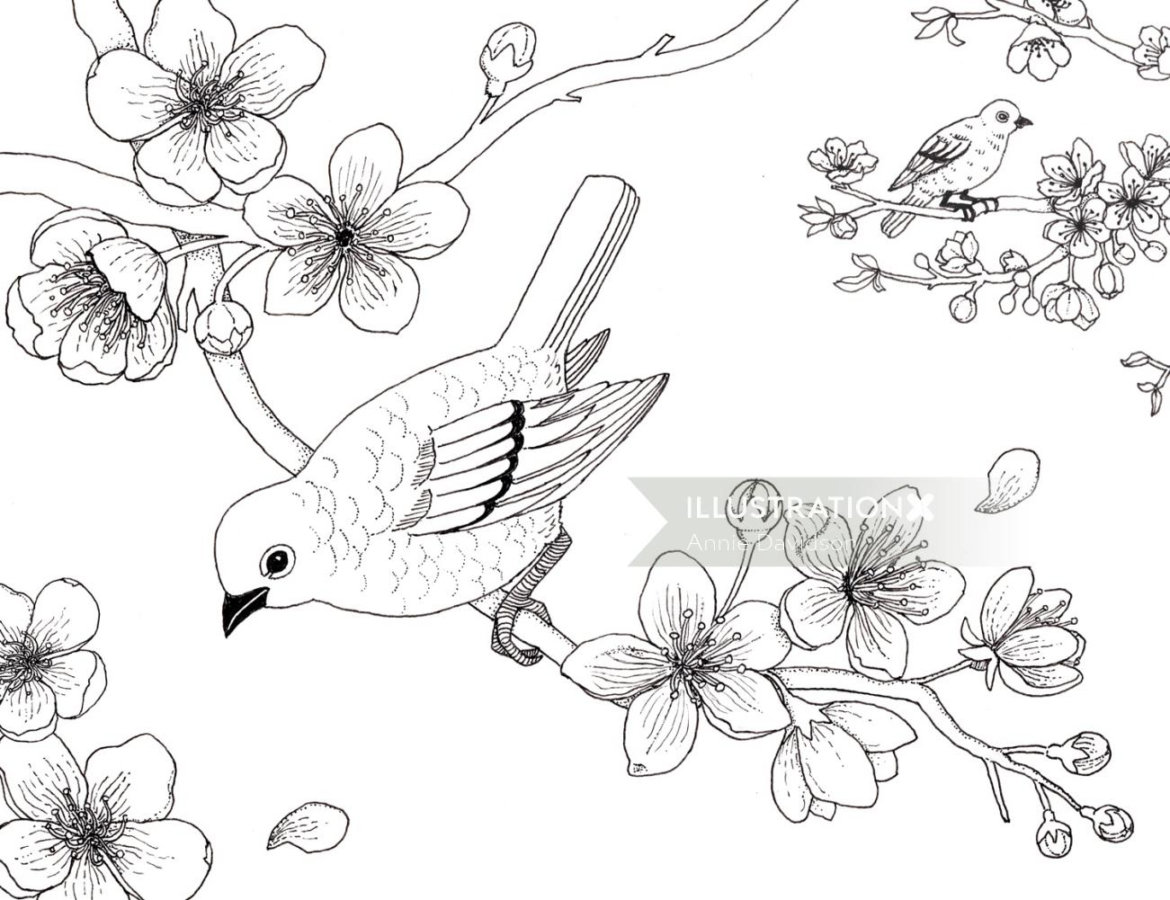 Black & white line illustration blossom colouring book