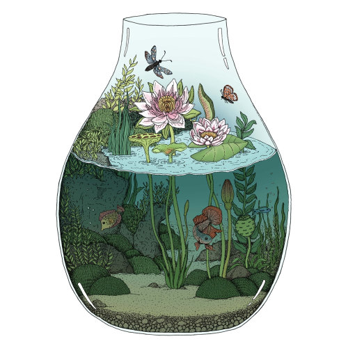 Conception graphique du terrarium Nénuphars