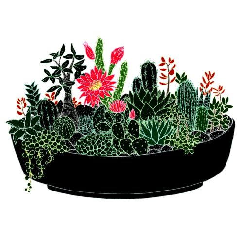 Black Cactus pot illustration