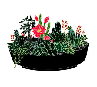 Black Cactus pot illustration