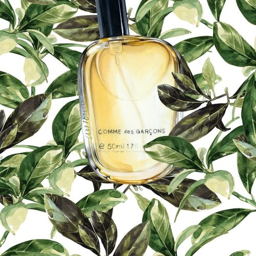 Watercolour Painting Of Eau De Parfum