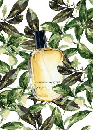 Watercolour Painting Of Eau De Parfum