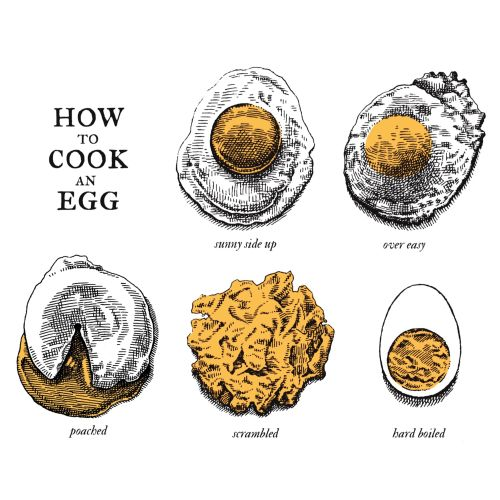 Book cover drawing for how to cook an egg