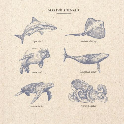 Marine animals illustration