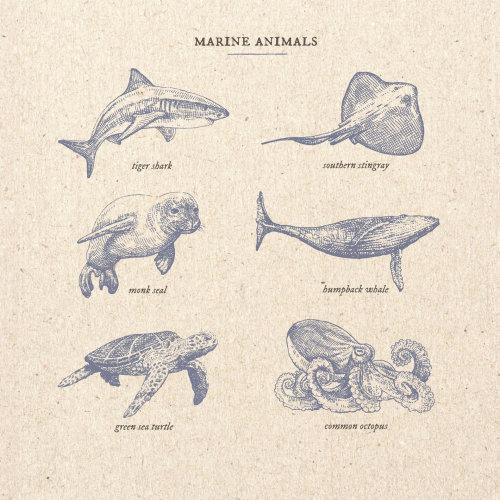 Ilustração de animais marinhos