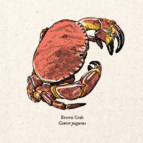 Arte vintage de caranguejo marrom