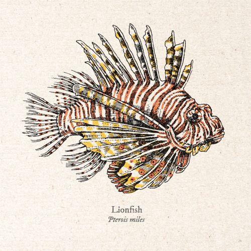 Lion fish Realistic artwork by August Lamm