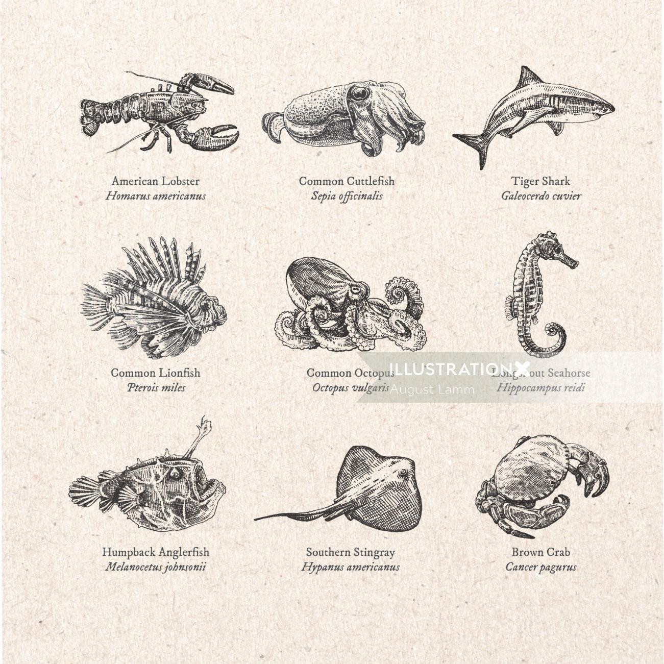 Black and white drawing of Aquatic animal