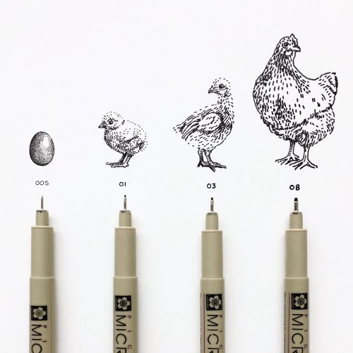 Pens with the life stages of a chicken from egg to chicken