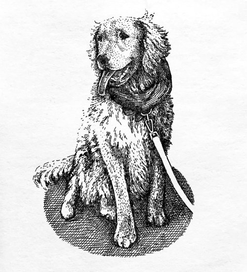 Black and white sketch of dog