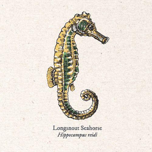 Long snout seahorse vintage art