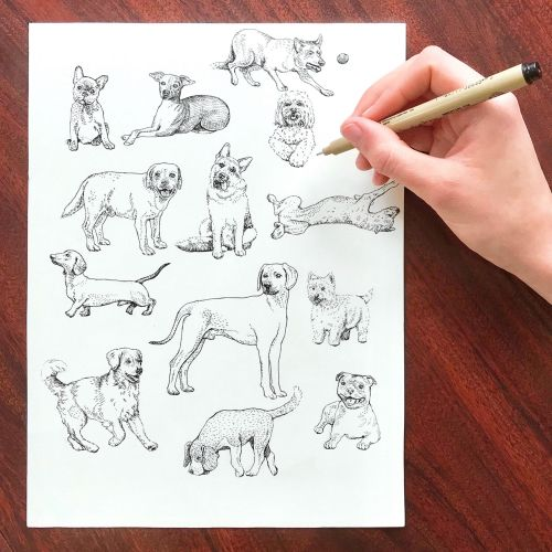 Live drawing of different type of dogs