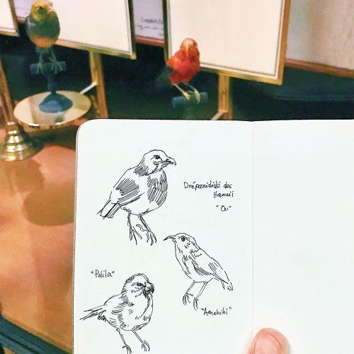 Birds sketch artwork by August Lamm