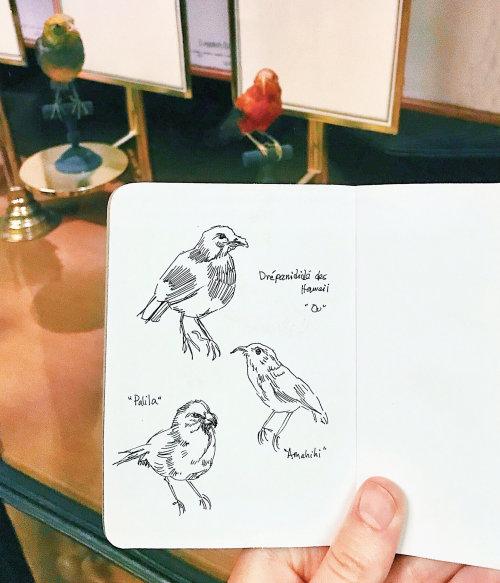 Arte de esboço de pássaros por August Lamm
