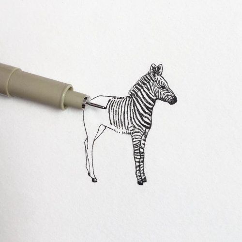 pencil drawing of zebra
