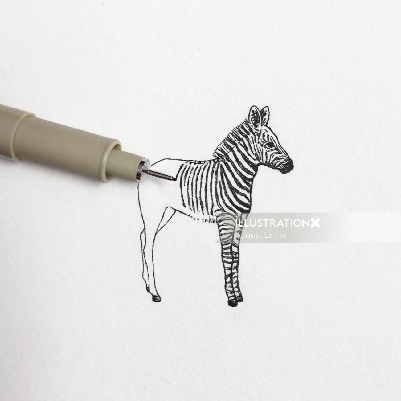 pencil drawing of zebra