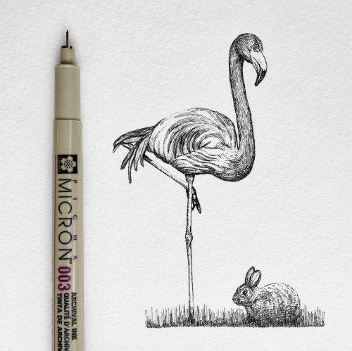 大白鹭鸟铅笔图稿