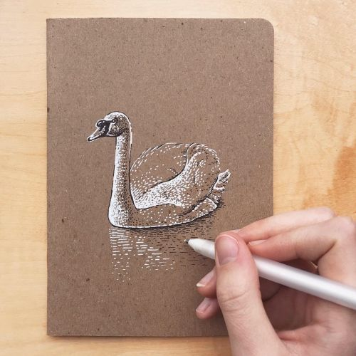 Vintage art of duck by August Lamm