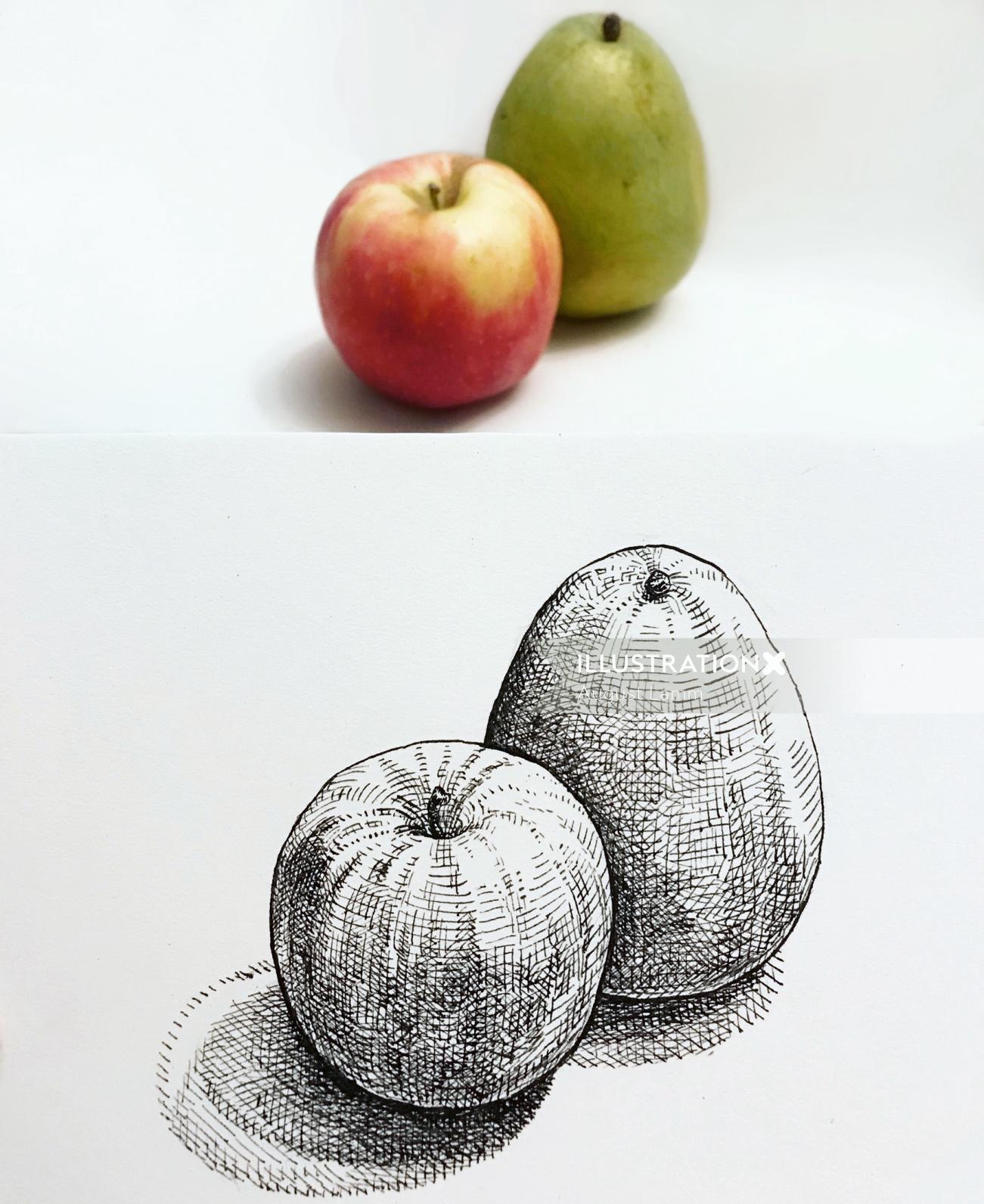 Line art of fruits
