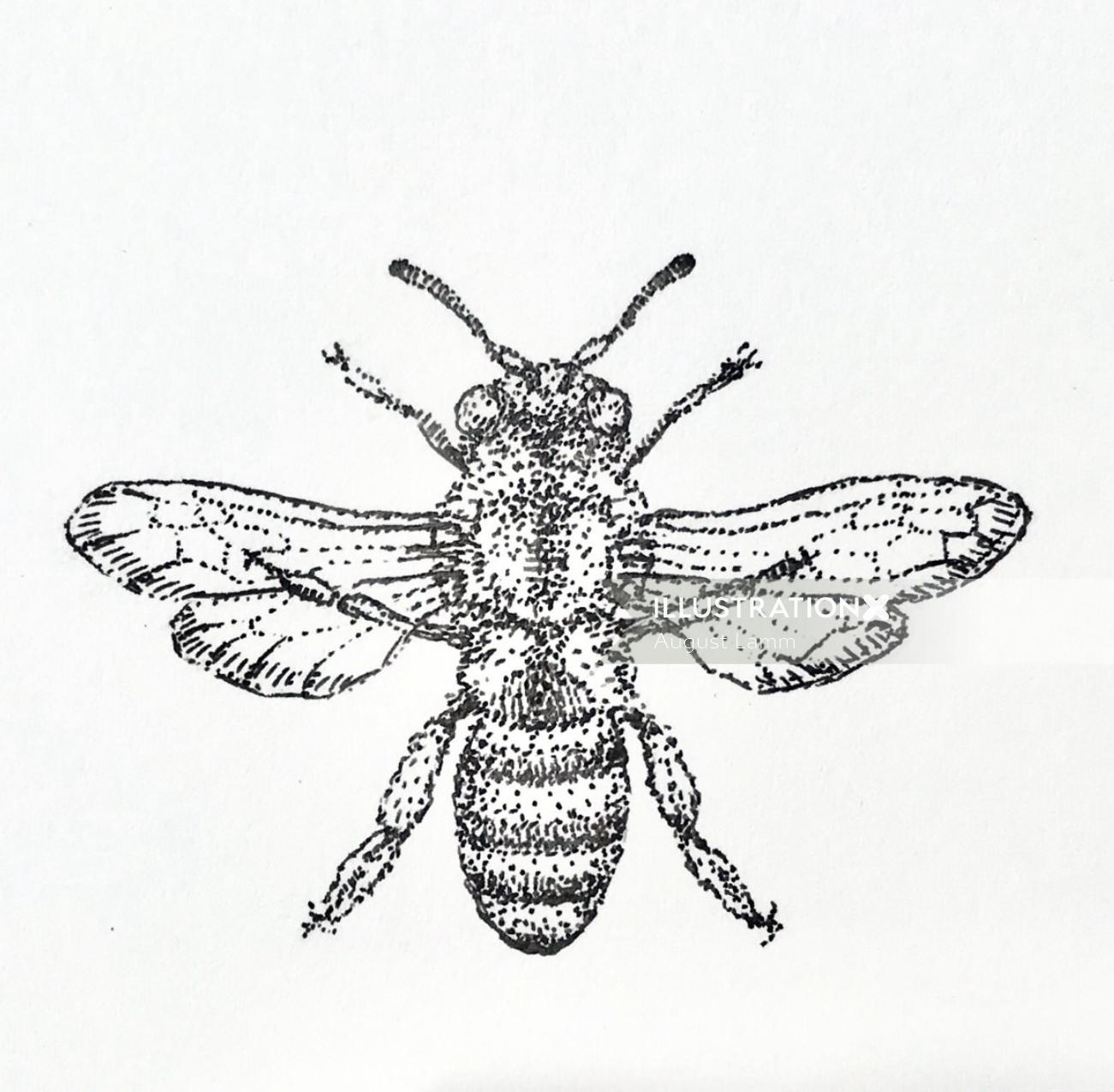 Honey bee drawing for beeswax salve company