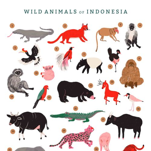 Wild Animals of Indonesia