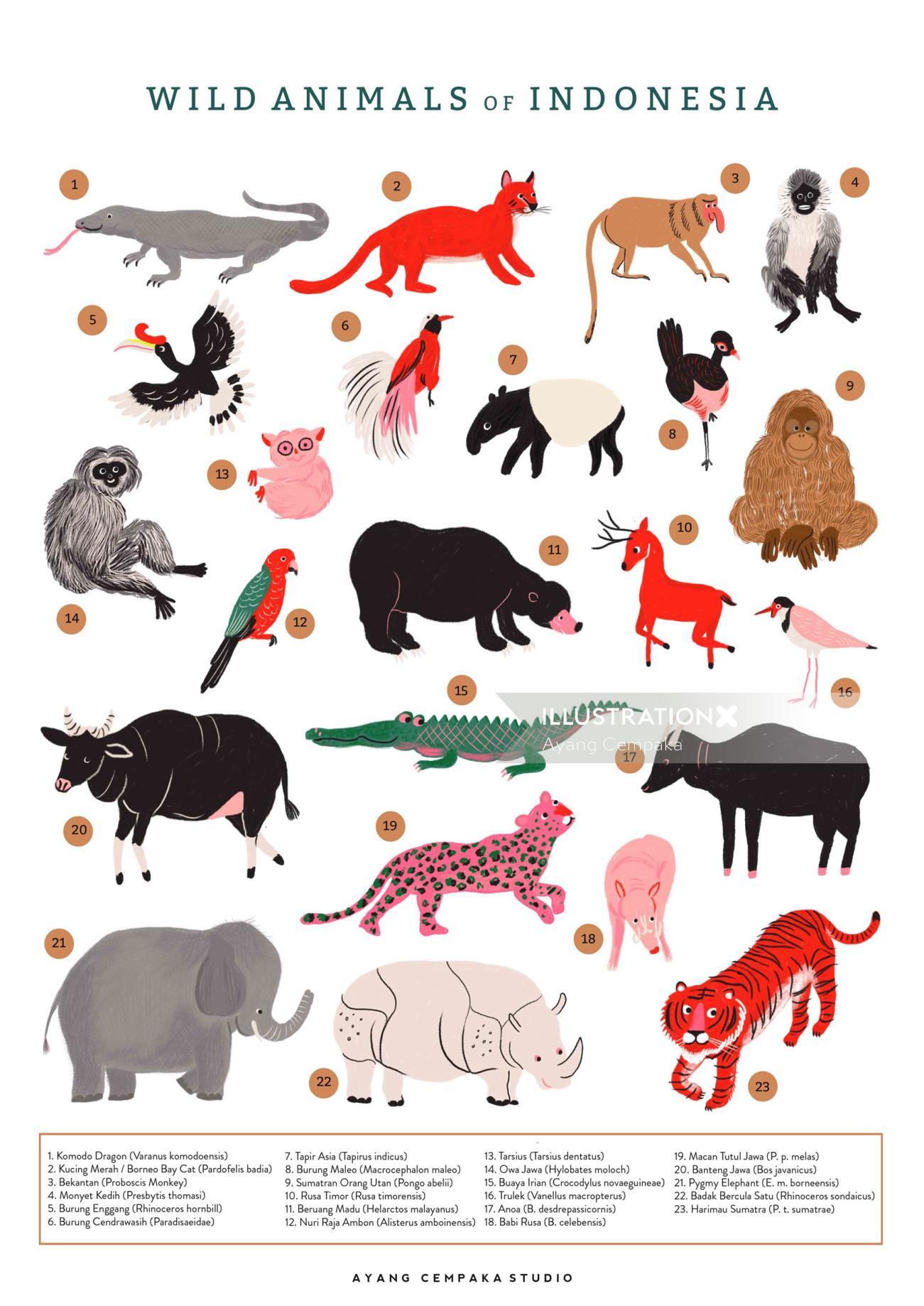 Wild Animals of Indonesia