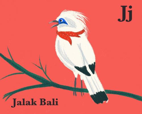Animais Jalak Bali