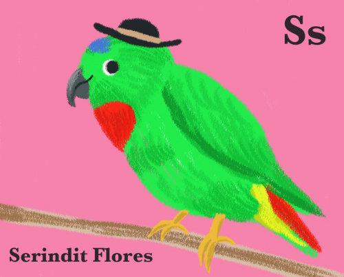 Papagaio verde infantil