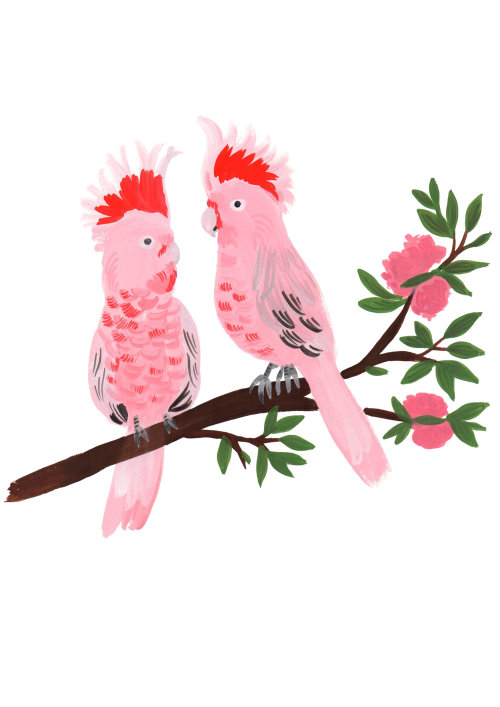 Animals Colorful pink birds