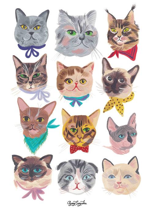 Diferentes caras de gatos