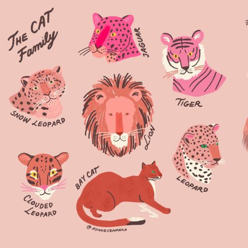Animals the cat family