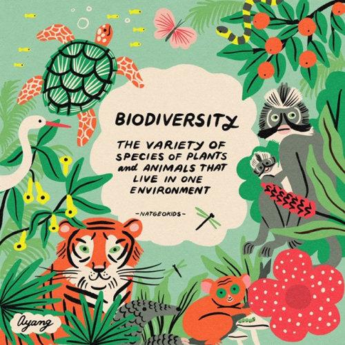 Graphic Bioversity flyer